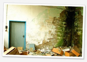 Mould Removal Service