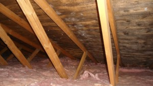 Mould in Attic