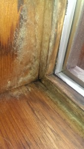 Mould Growth In Corner